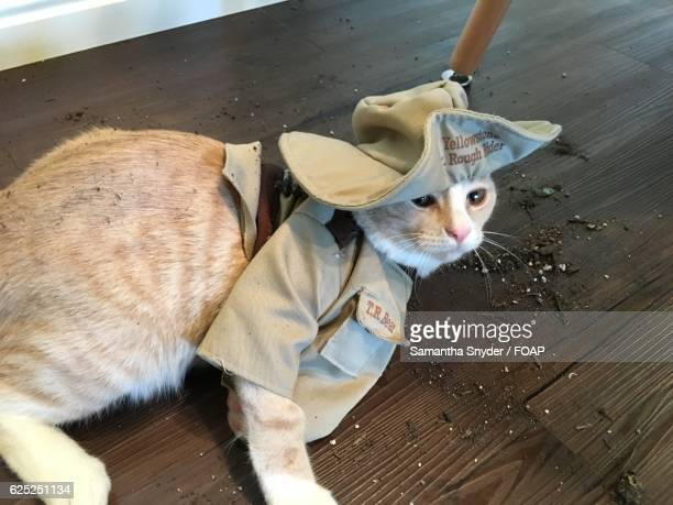 cat wearing costume - cat costume stock photos and pictures