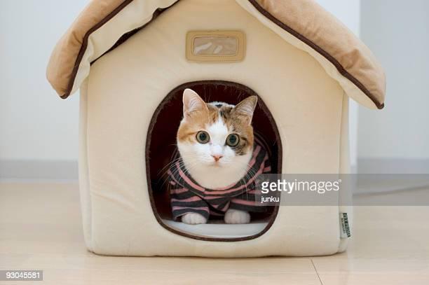 Cat wearing dress sitting  in house
