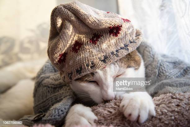 cat wearing knit hat and scarf - animal costume stock pictures, royalty-free photos & images
