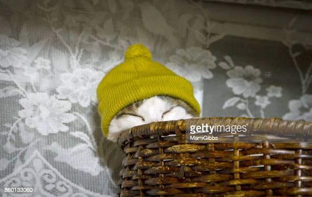 Cat wearing knit hat
