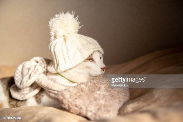 cat wearing scarf and knit hat - froid humour photos et images de collection