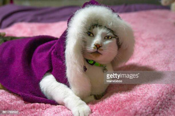 cat wearing winter jacket - purple coat stock pictures, royalty-free photos & images
