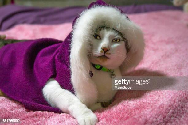 Cat wearing winter jacket