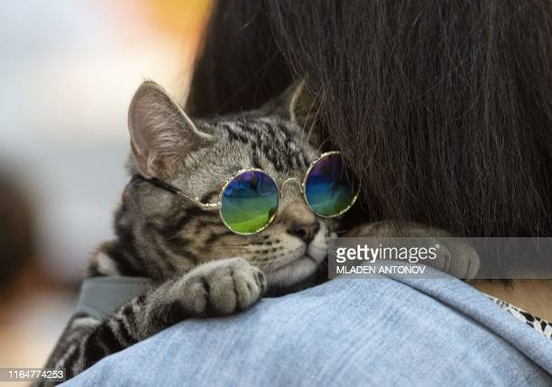TOPSHOT A cat wering glasses leans on the shoulder of its owner at the Pet Expo Championship in Bangkok on August 30 2019