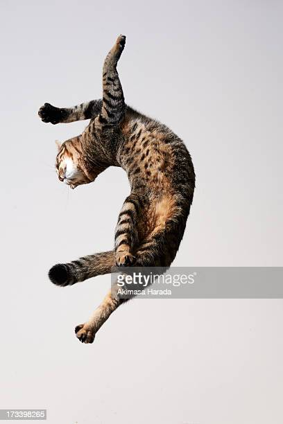 cat which jump and twisted his body like dancing. - verdreht stock-fotos und bilder