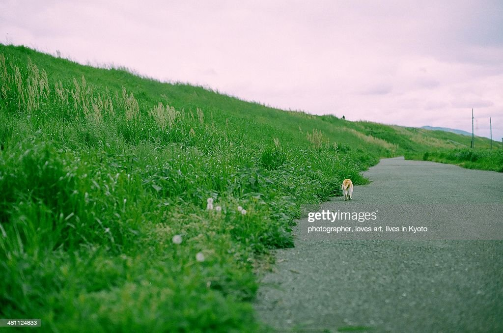 cat which passes over there of the embankment : Stock Photo