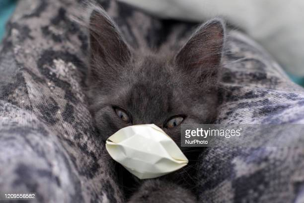 A cat with a protective mask in Buenos Aires Argentia on April 7 2020 Researchers from the Harbin Veterinary Research Institute discovered that cats...