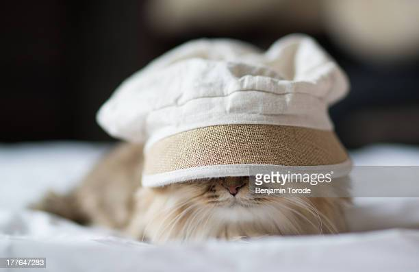 Cat with an Oversized Hat