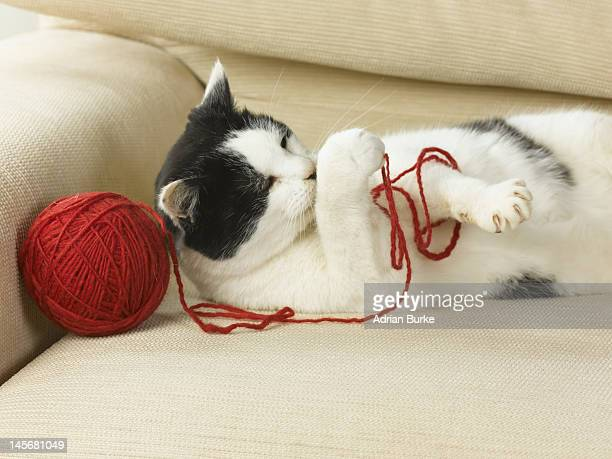 Cat with ball of String.