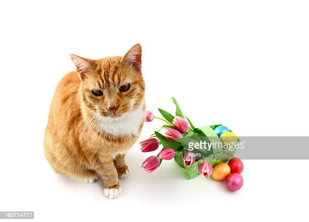 cat with basket bunch pink tulips and eggs - lily family stock pictures, royalty-free photos & images