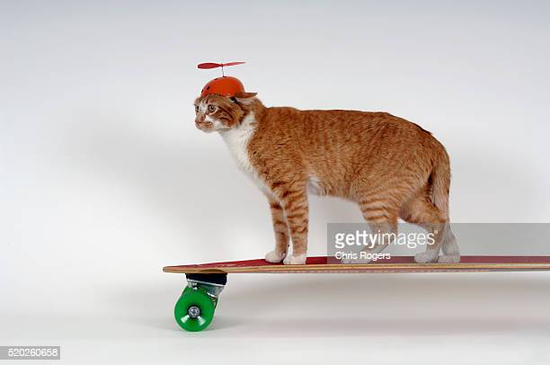 Cat with Beanie Riding Skateboard