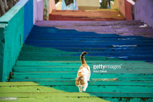 cat with beautiful colorful stairs in the city of amman. - amman stock pictures, royalty-free photos & images