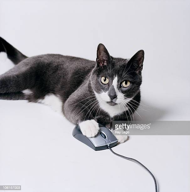 Cat with computer mouse.