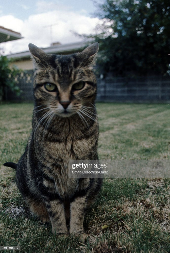 Cat, With Confused Look : ニュース写真