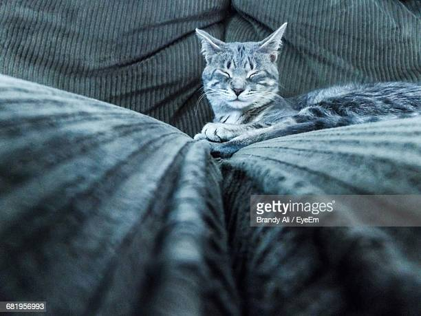 Cat With Eyes Closed Relaxing On Sofa At Home