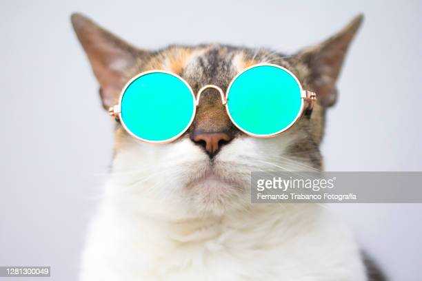 cat with glasses - kitten stock pictures, royalty-free photos & images