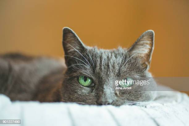 Cat With Green Eyes, Conceptual Cat