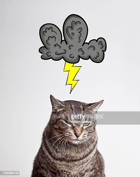 Cat with grey cloud hovering over head