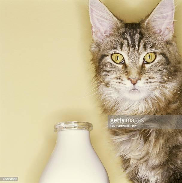 Cat with jug of milk