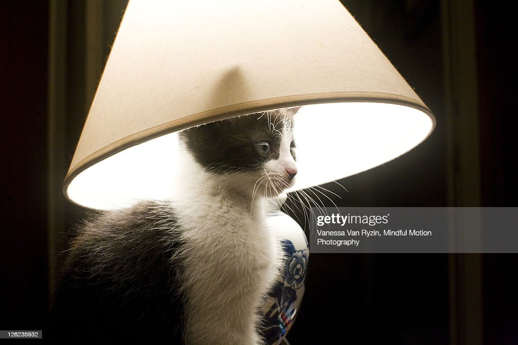 Cat with lampshade : Stock Photo