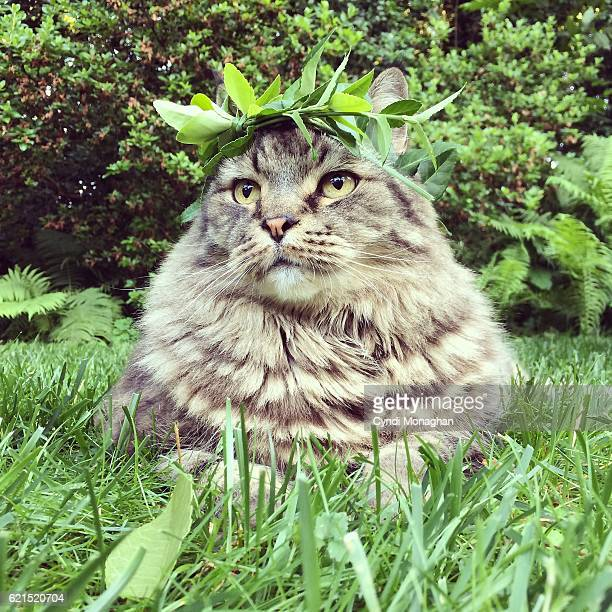 Cat with Leaf Crown