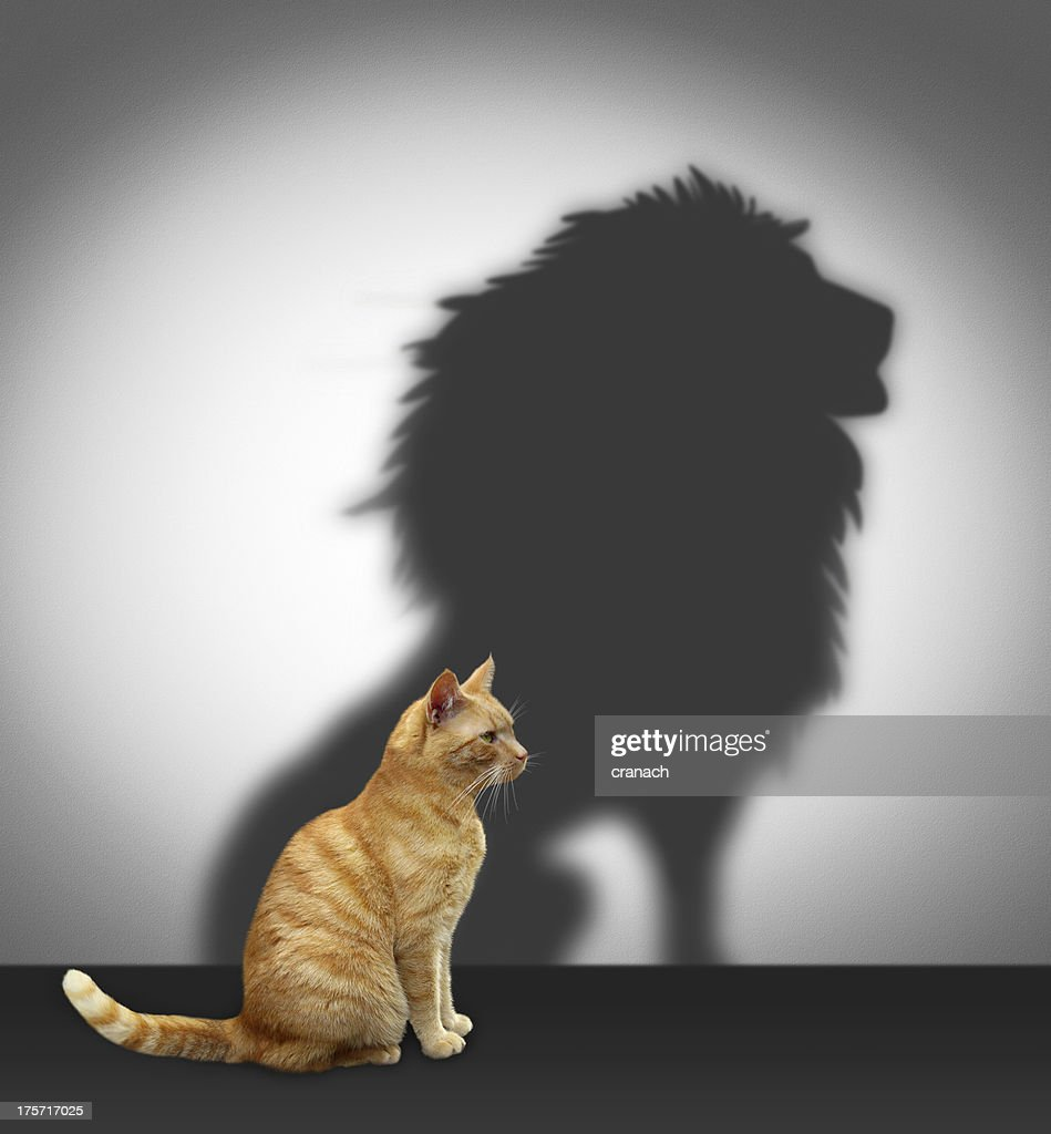Cat with lion shadow : Stock Photo