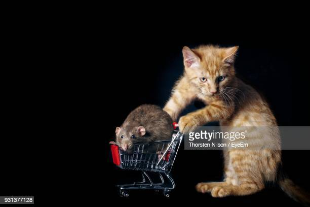 Cat With Mouse On Shopping Cart Against Black Background