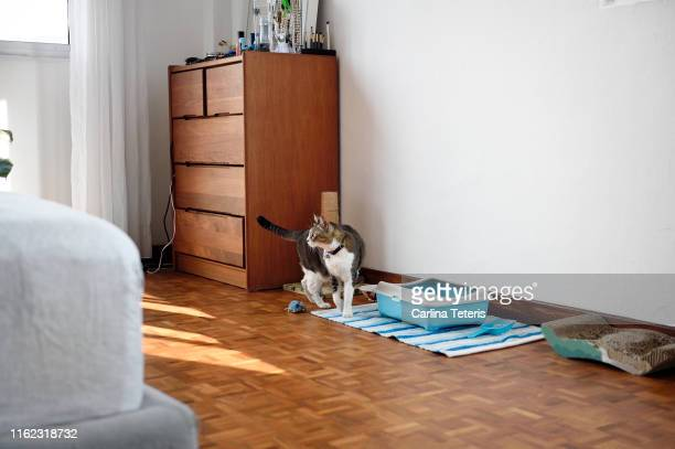 cat with pet supplies in a bedroom - litter box stock photos and pictures