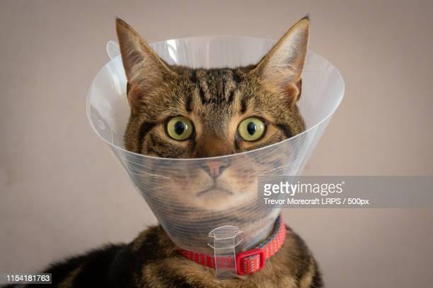 cat with protective collar around neck - kegel stockfoto's en -beelden