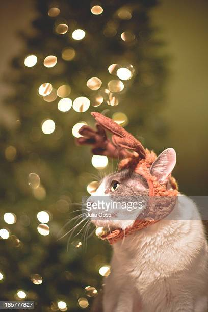 Cat with reindeer antlers