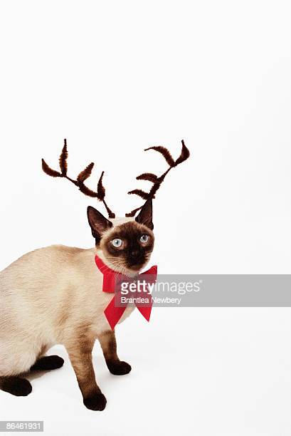 Cat with reindeer antlers