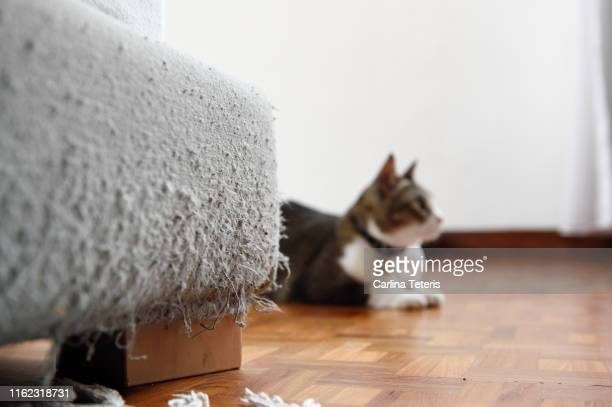 cat with scratched bed - misbehaviour stock pictures, royalty-free photos & images