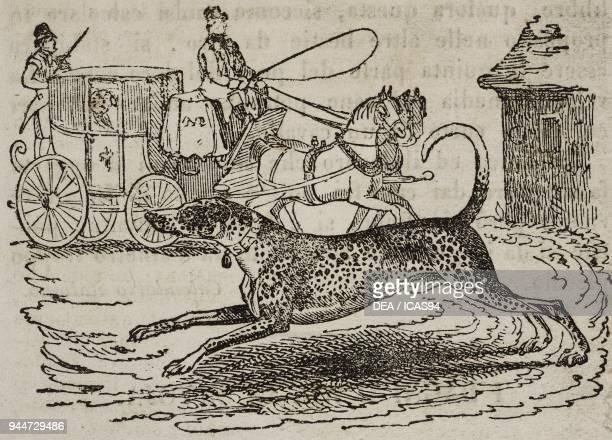 Catahoula Leopard Dog and a carriage, illustration from Teatro universale, Raccolta enciclopedica e scenografica, No 586, October 4, 1845.