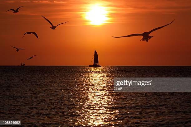 Catamarano-Yacht a vela contro il sole durante il tramonto