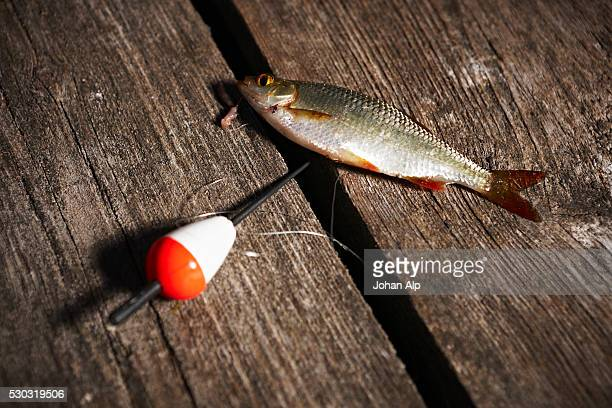 Catch of fish on jetty