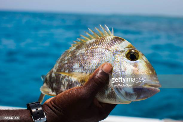 Catch of the day a porgy fish at a fishing yacht on June 15 2012 in Long Island The Bahamas