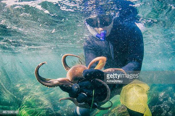 catching an octopus - octopus stock pictures, royalty-free photos & images
