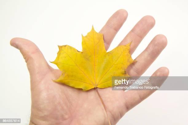 Catching autumn
