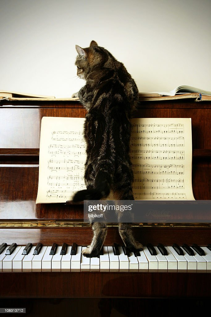 Cat-Composer