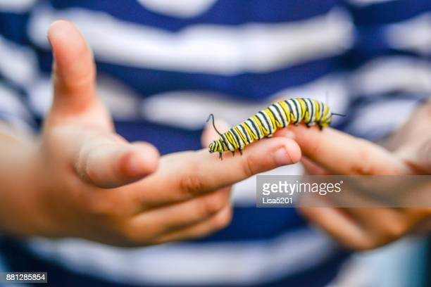 caterpillar kid - insecte photos et images de collection