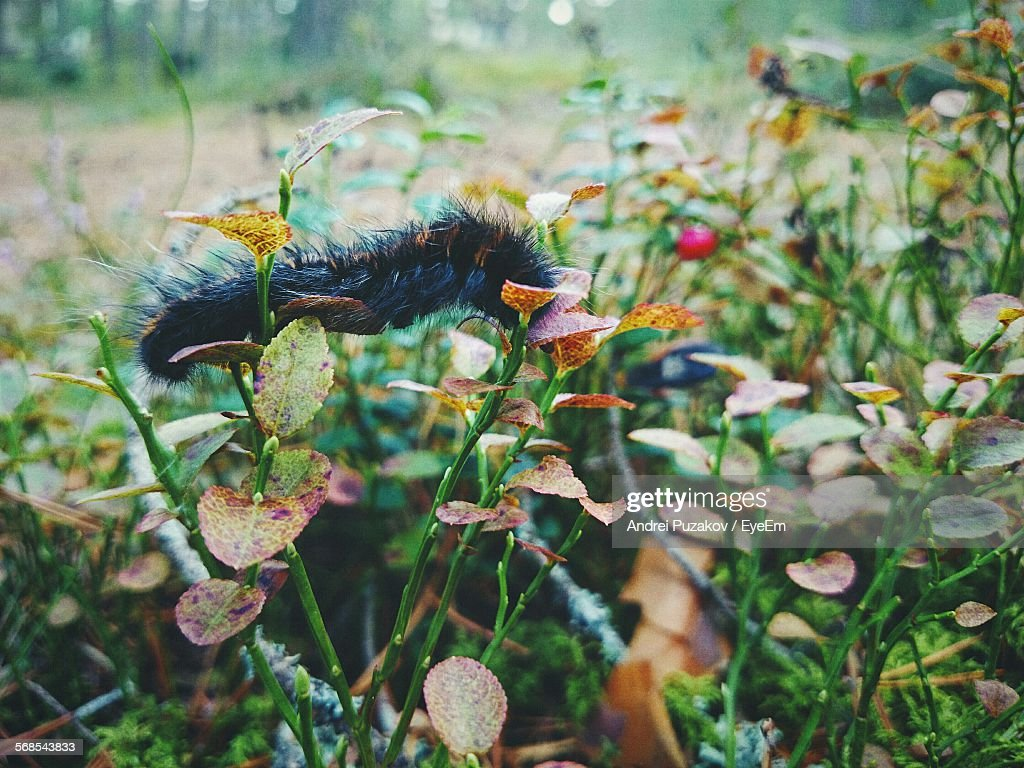 Caterpillar On Plants : Stock Photo
