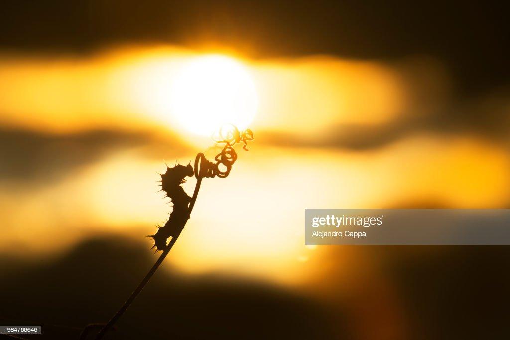 Caterpillar reaching Sunset : Stock Photo