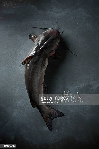 catfish - catfish stock photos and pictures