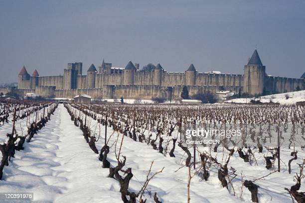 Cathar country Carcassonne France Vines at the foot of the remparts of the City