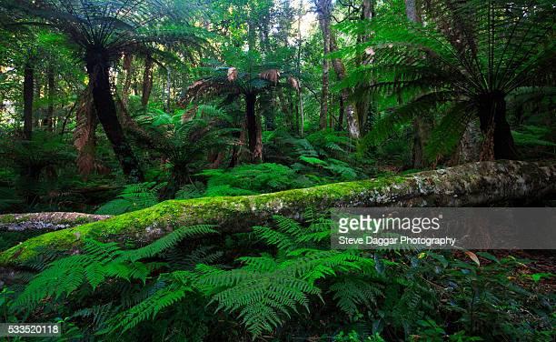 cathedral of ferns - foresta temperata foto e immagini stock