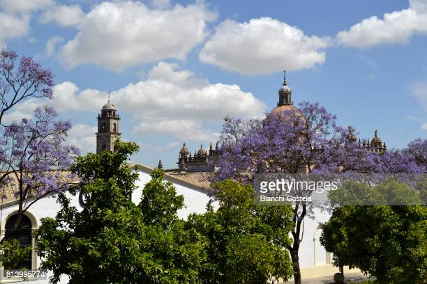 cathedral of jerez de la frontera - jerez de la frontera stock pictures, royalty-free photos & images
