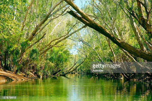 A cathedral of Paperbarks lining the banks of the Wilton River a wild tributary of the Roper River Wongalara Station Reserve southeast Arnhem Land...