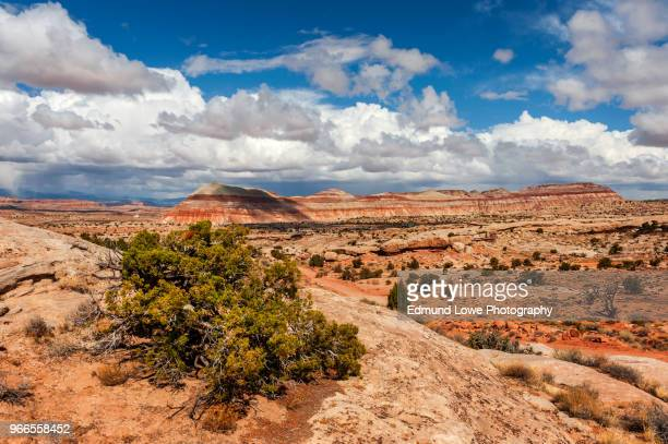 cathedral valley, capitol reef national park, utah. - capitol reef national park stock pictures, royalty-free photos & images