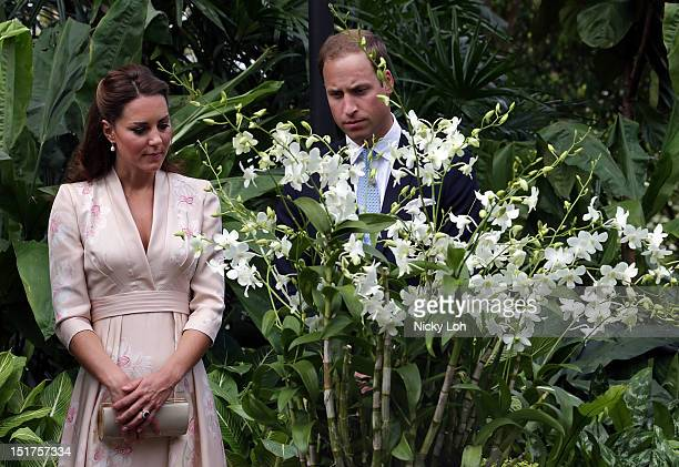 Catherine Duchess of Cambridge and Prince William Duke of Cambridge look at an orchid named in honour of Diana Princess of Wales at Singapore...