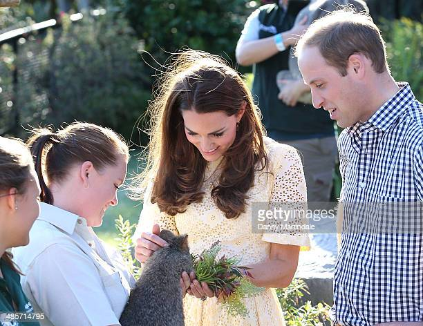 Catherine Duchess of Cambridge and Prince William Duke of Cambridge meet a Quokka at Taronga Zoo on April 20 2014 in Sydney Australia The Duke and...